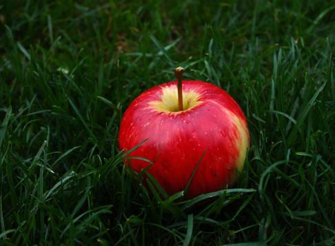 Hvad betød det, at Eva spiste af æblet?