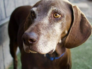 ON THE TRAIL WITH JOSIE: SIMPLE WISDOM FROM ONE DOG'S LIFE WELL-LIVED