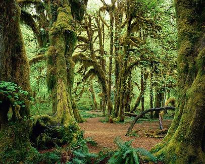 Green-Forest-Wallpaper-green-20036585-12