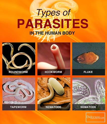 Parasite Cleanse