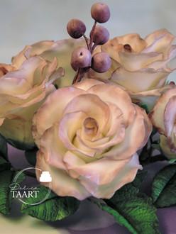 Wit paarse rozen
