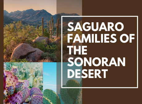 The Saguaro Families of the Sonoran Desert