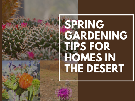 Spring Gardening Tips for Arizona Homeowners