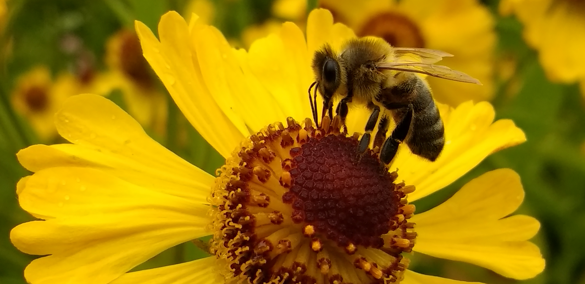 Beekeeping Courses by Norstar Tourism Ed