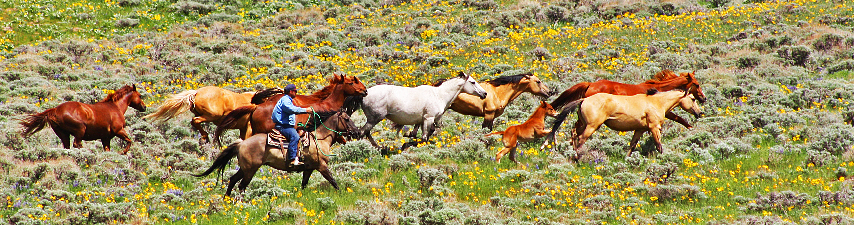 Moving the mountain horses