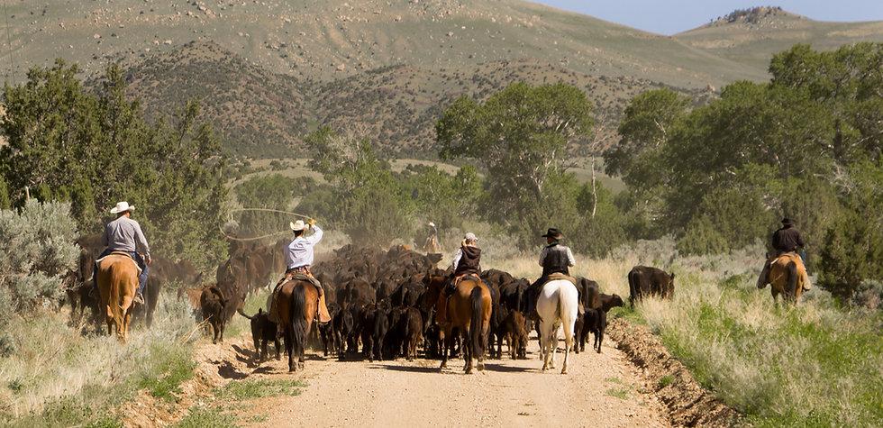 cattledrive-7739.jpg