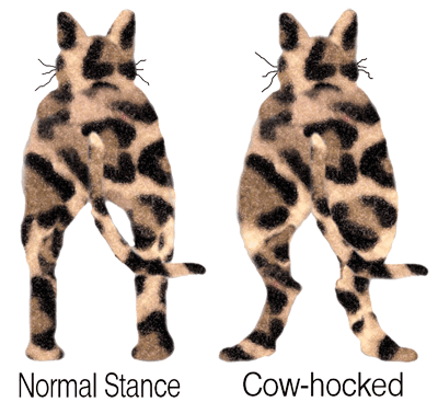 Normal Stance vs Cow-Hocked