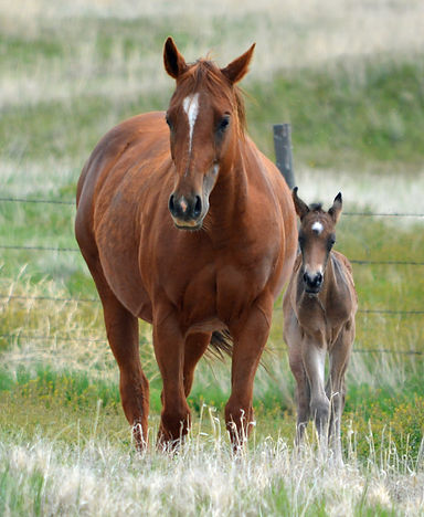 oakland-and-foal-front_1_orig.jpg