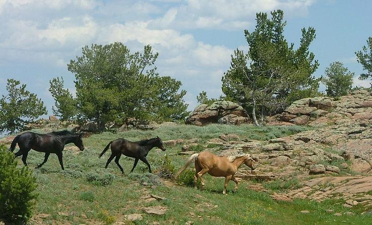 pretty mountain horse scene.jpg