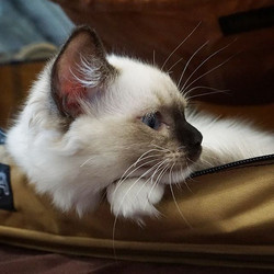 Lost in Thought 💕 we have kitty go-bags handy and the Ranch storm shelter ready with Sturdi pop-ups