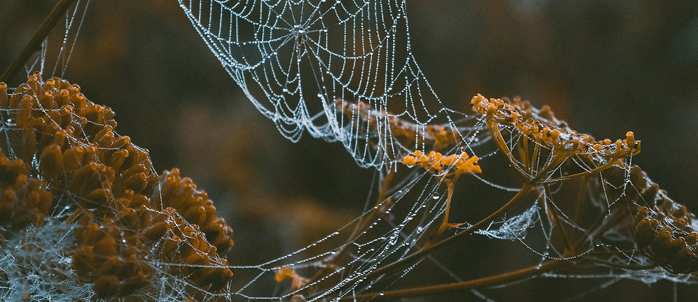 cobwebs sparkling with morning dew, draped across dying flowers
