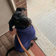 Mando the dog wears a dapper blue sweater and looks expectantly up at the camera.