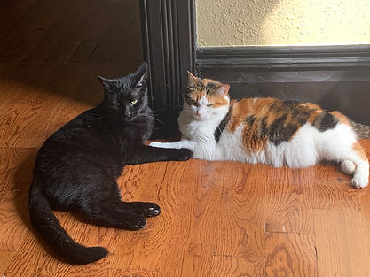 A black cat named Bean glares at the camera while his older sister Reese, a calico, thinks about napping