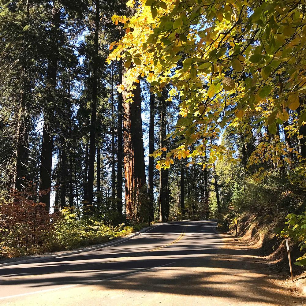 Fall foliage along the roadside in Sequoia Nat'l Park
