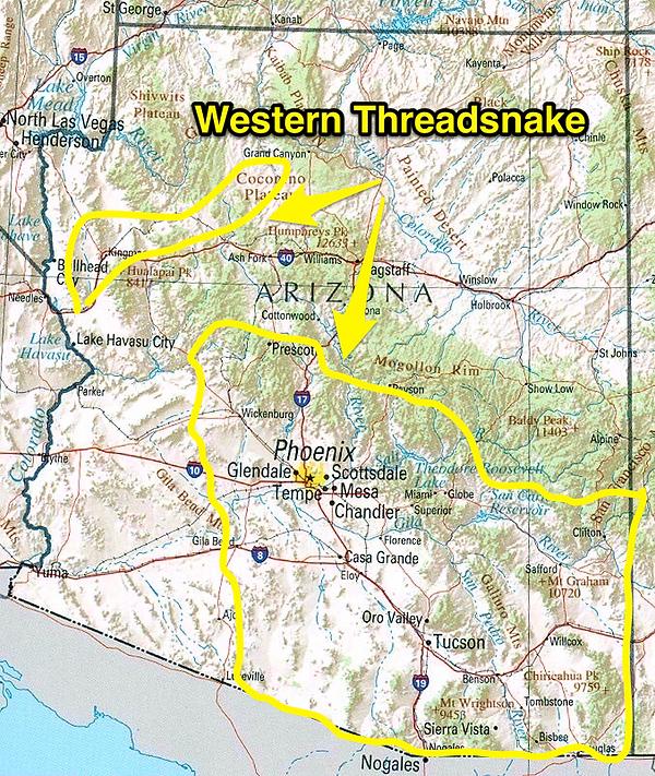 Western Threadsnake