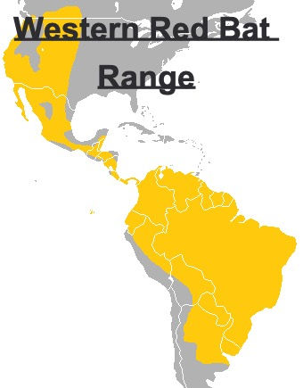 Western Red Bat Range Map