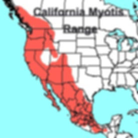 California Myotis Range