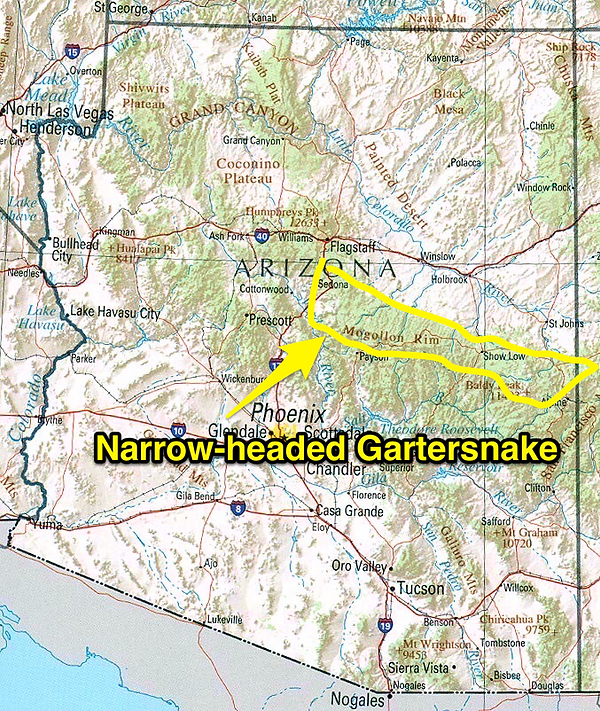 Narrow-headed Gartersnake