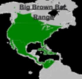 Big Brown Bat Range map