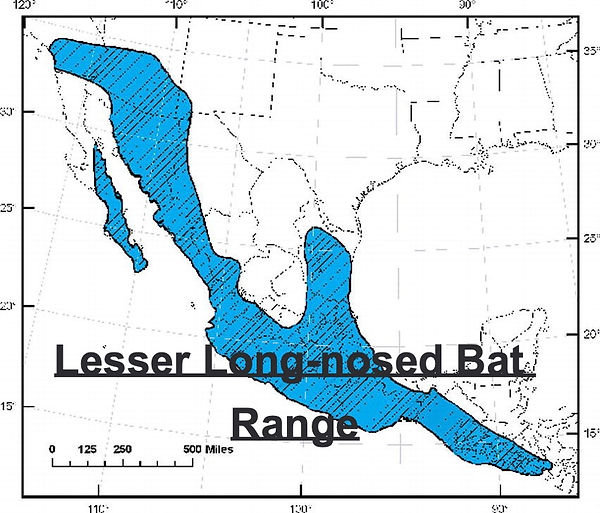 Lesser Long-nosed Bat Range Map
