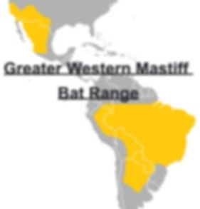 Greater Western Mastiff Bat Range Map