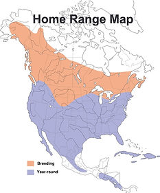 Red Tailed Hawk Map