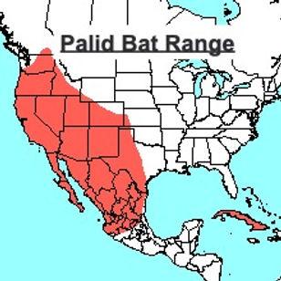 Palid Bat Range Map