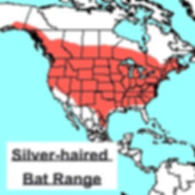 Silver-haired Bat Range