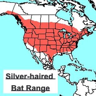 Silver-haired Bat Range
