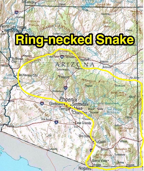 Ring-necked snake range