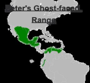 Peter's Ghost-faced bat range