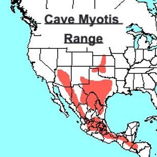 Cave Myotis range