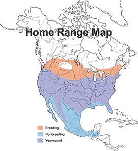 Coopers Hawk Map