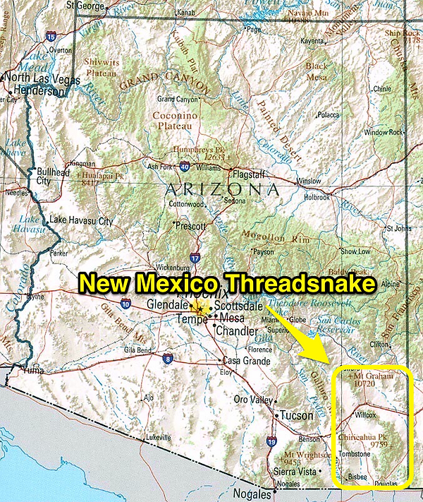 New Mexico Threadsnake range
