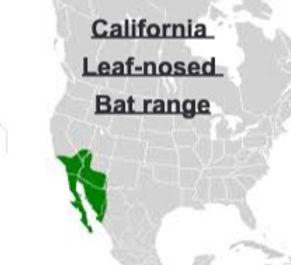 California Leaf-nosed Bat Range