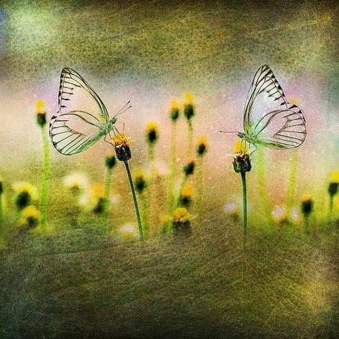 butterfly-2731598_1920.jpg