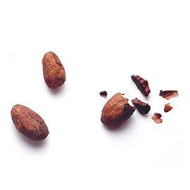 Kakaobohne.jpg