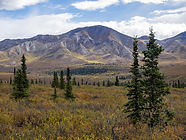 Alaska landscape of mountains and trees