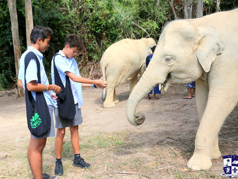 Senior School Project: Samui Elephant Haven