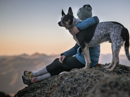 5 Mental Health Benefits of Owning a Dog