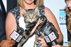 """Tara the """"Hero Cat"""""""