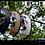Thumbnail: The Black Grains