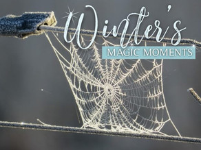 Winter's Magic Moments