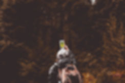pexels-photo-1526791 (1).jpg