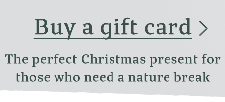 Gift Vouchers Available for Christmas