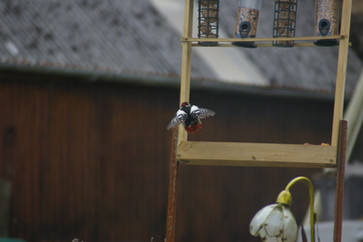 YGelli Glamping resident woodpeckers
