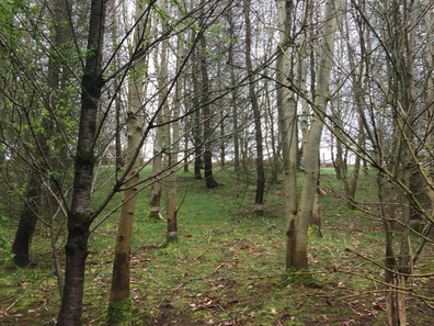 Y'Gelli Nearly Wild Camping Open for Easter