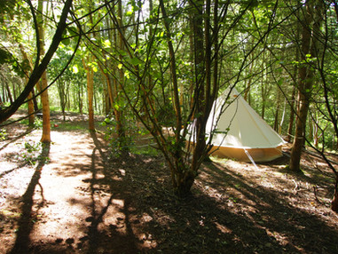Bell Tent in the trees