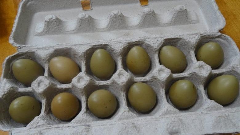 One Dozen Pheasant Eggs