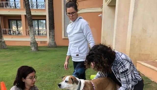 פיזיותרפיה לכלבים נועה יוסף אפק